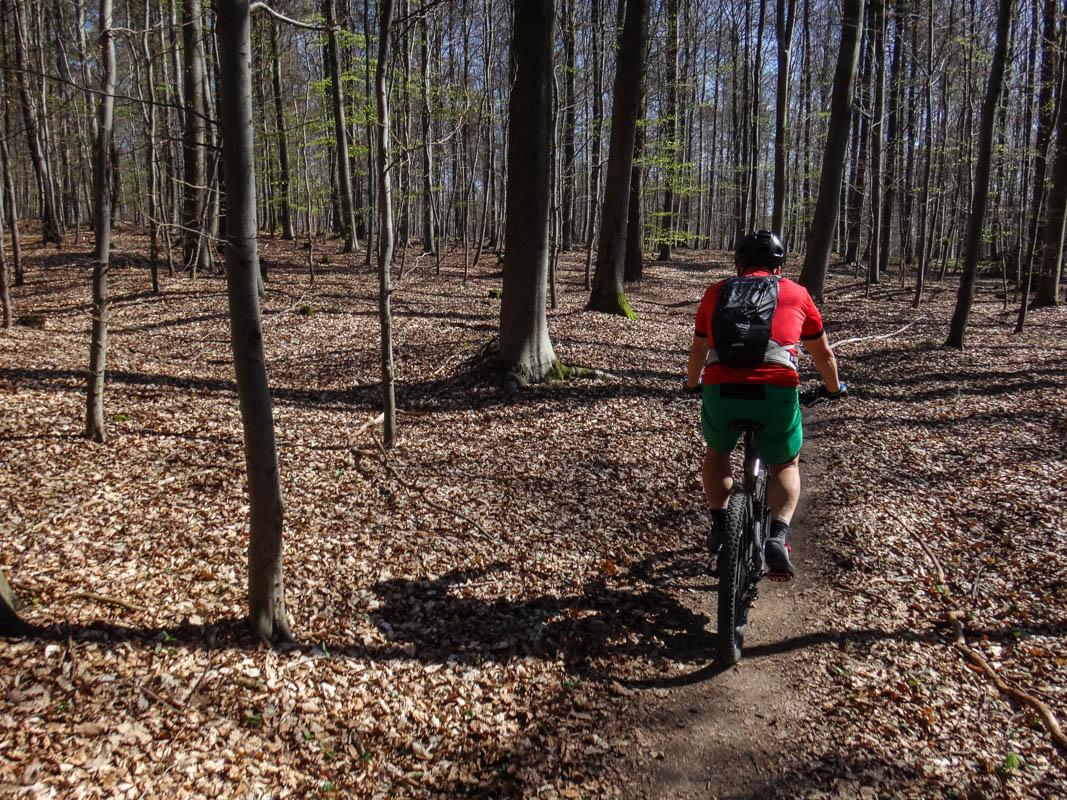 Durch den Wald zum Königsstuhl